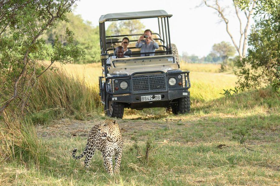 Quelques infos à savoir avant de partir en safari au Botswana